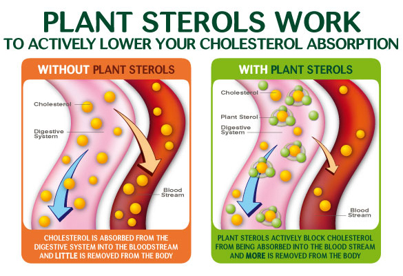 menghilangkan kolestrol kolesterol Phytocol ST Shaklee Menghalang Pembentukan Kolesterol How it Works Content Image1740 305661