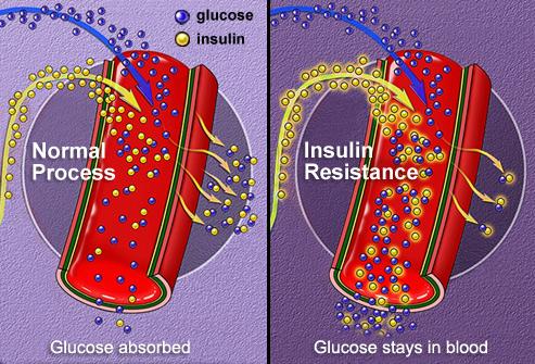 bagaimana insulin berfungsi
