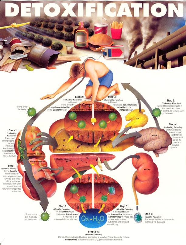 Vitamin Untuk Bersihkan Darah dan Toksin