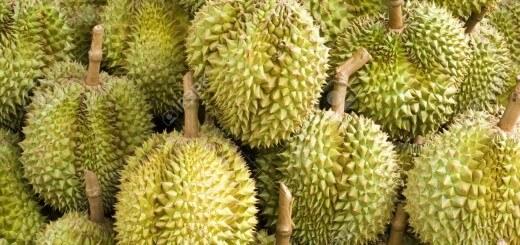 13581713-Durian-k-stliche-tropische-Frucht-in-Obststand-Thailand-Stockfoto