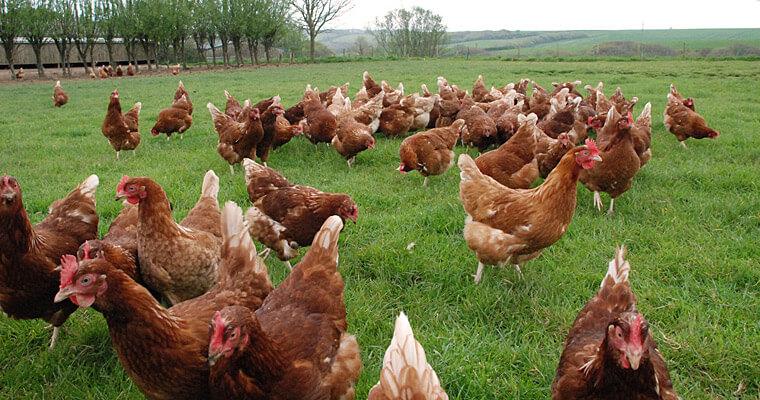 image_1 {focus_keyword} Info Pasal Telur, Kenapa Ade Telur Murah dan Ade Telur Mahal? image 1