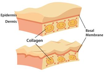 Vitamin Meningkatkan Kolagen Untuk Kulit Yang Cantik