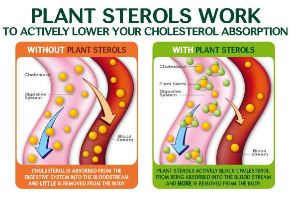 Phytocol ST Shaklee Menghalang Pembentukan Kolesterol