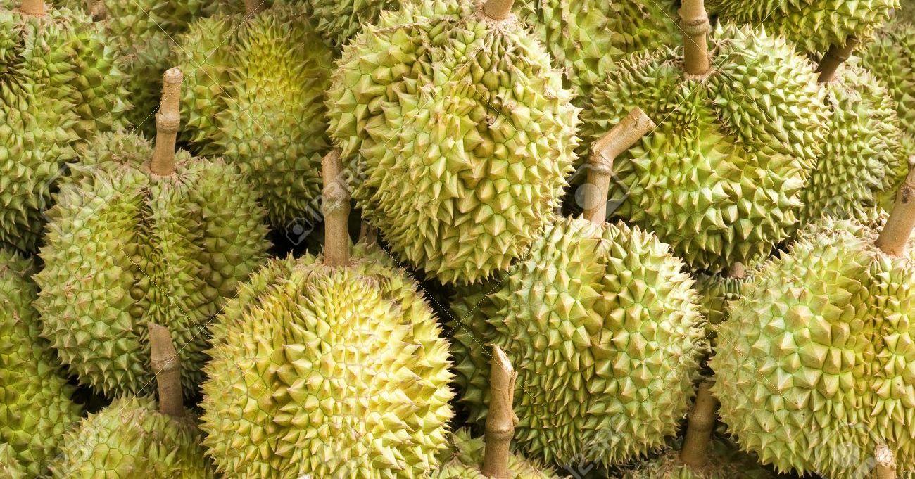 Fakta Mengejutkan Tentang Durian